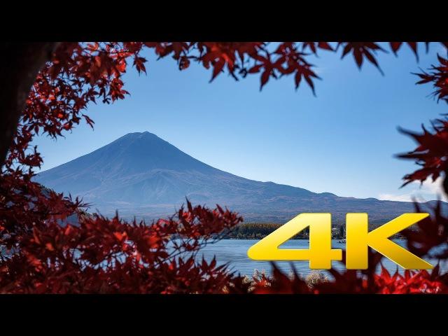 Kawaguchiko Maple Corridor - Yamanashi - もみじ回廊 - 4K Ultra HD