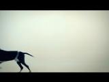 Пающие Трусы - Василёк  (Осторожно! Нецензурная версия)_HD