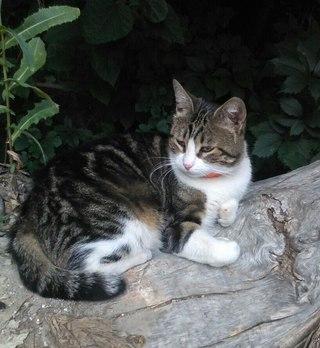 Найденые коты на братиславской