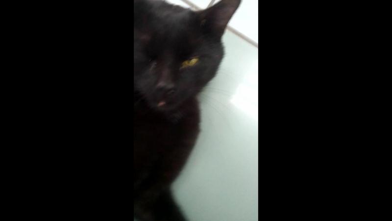 мачо 2