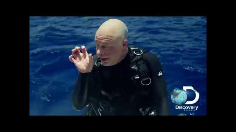 Длиннокрылая акула - самое масштабное нападение в истории