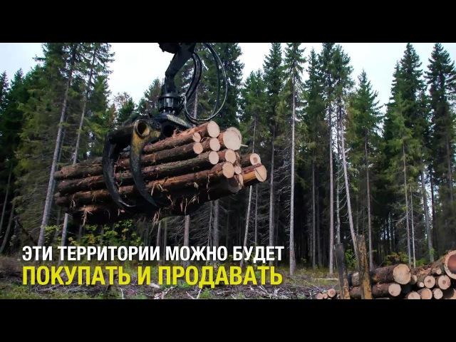 ЗАПОВЕДНИКАМ РОССИИ ГРОЗИТ ПРИВАТИЗАЦИЯ!