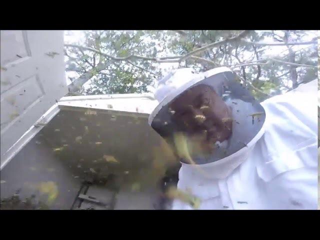 Gigantic Hornets Nest Extraction in Louisiana