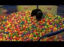 Джет и большая корзина шариков Знакомство! 10.12.17 на выставке в Хельсинке.