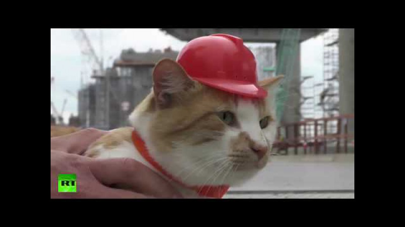 Cat becomes unofficial construction foreman in Russia