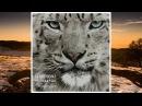 DJ Aristocrat & Paula P'Cay - The Power Of Love (Original Mix)