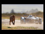 Drag Race Formula E Car vs Cheetah