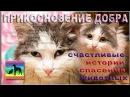 Спасли умирающего котенка в приюте Дари добро rescue animals at the shelter Dari dobro Novosibirsk
