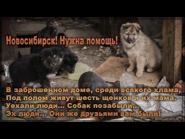В сгоревшем доме щенки и собаки пропадают от жестокости людей | In the burnt house puppies and dogs