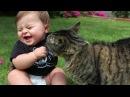 Дети истерически смеются над кошками