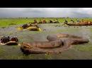 Самая большая змея в мире ТОП 10