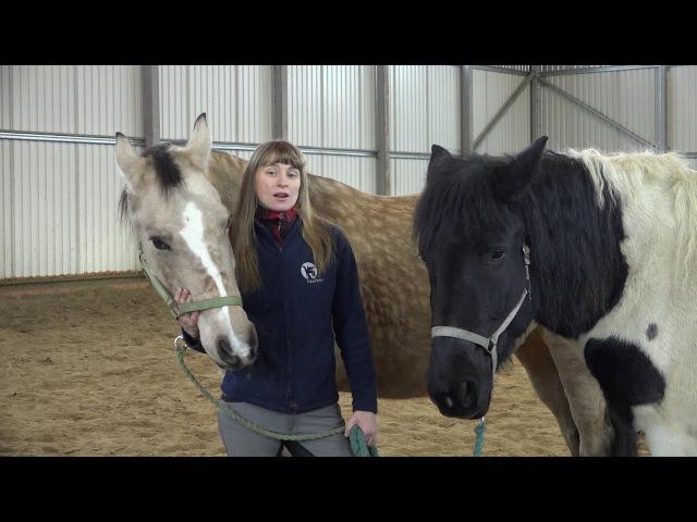 Открытый вебинар 3 шага к трансформации себя и лошади