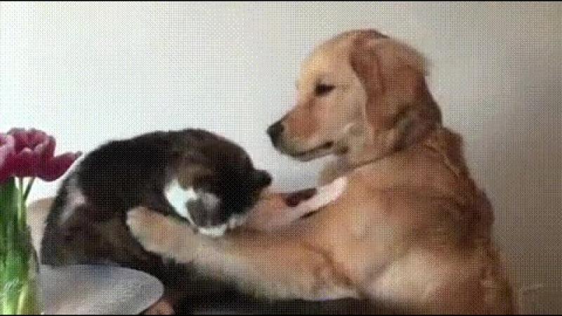 Когда ты злишься, а он пытается тебя успокоить
