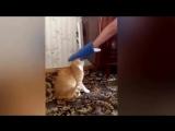 Кот убийца
