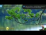Morrison Kiers - Elysion (Musty Remix) [Progressive House Worldwide]