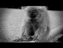 Sad Monkey 2