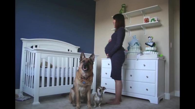 9 месяцев беременности за 1,5 минуты