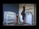 9 месяцев беременности за 1 5 минуты