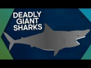 Megalodon The Most Ferocious Giant Shark In History - Earth Unplugged