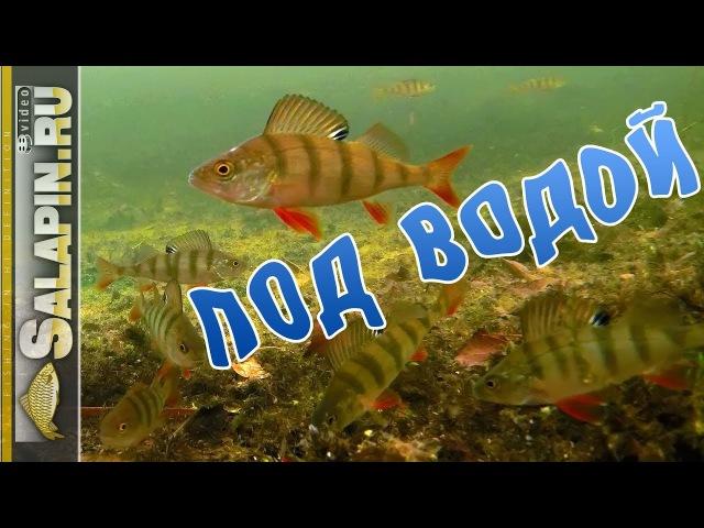 Окунь клюет на блесну и мормышку (подводное видео) [salapinru]