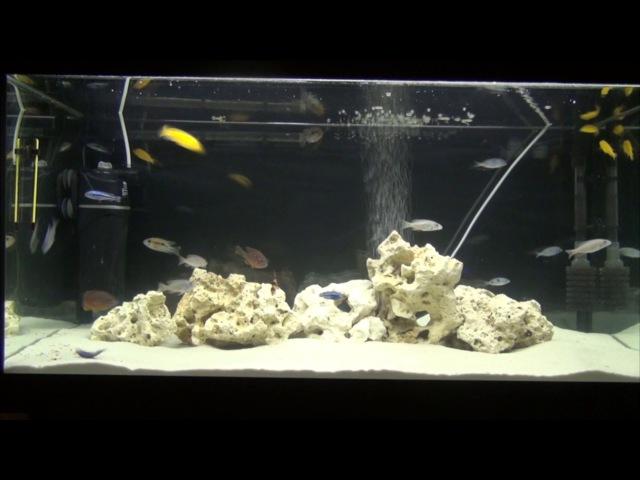 Интерактивный аквариумный туризм Сезон 3 Выпуск 16(Естественный отбор)