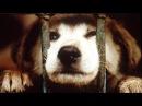 Собака любила СМОТРЕТЬ ВСЕМ ТРОГАТЕЛЬНОЕ ВИДЕО ДО СЛЁЗ