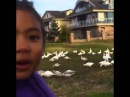 Look At All Those Chickens Original Uncut Vine