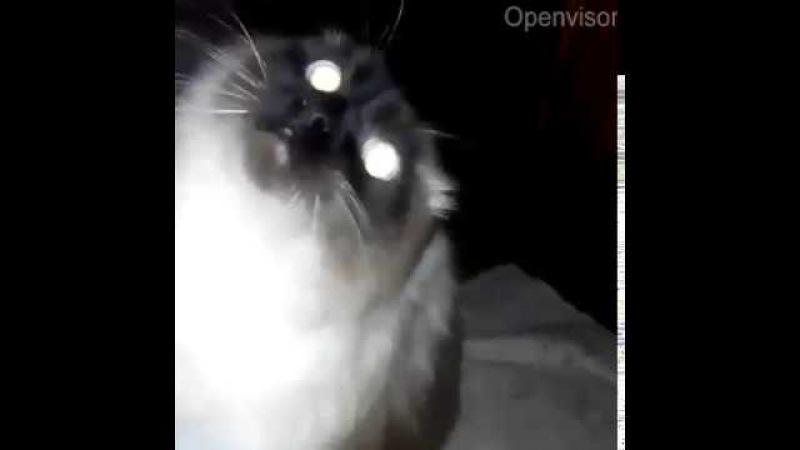 Кот не дает выйти из кухни