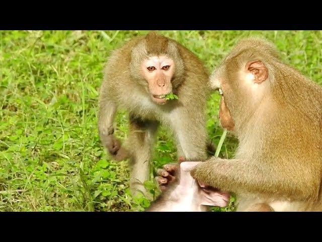 Cute Little Baby Monkey Made Teenage Monkey Scare Him, Adorable Baby Monkey Newborn
