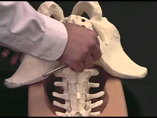 Long-Segment Spinal Fixation Using Pelvic Screws