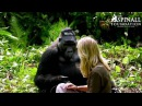 Heart warming moment Damian Aspinall's wife Victoria is accepted by wild gorillas OFFICIAL VIDEO