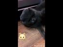 Джан котик