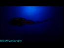 02 BBC Голубая планета Бездна