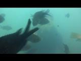 море 2017 это я с аквалангом