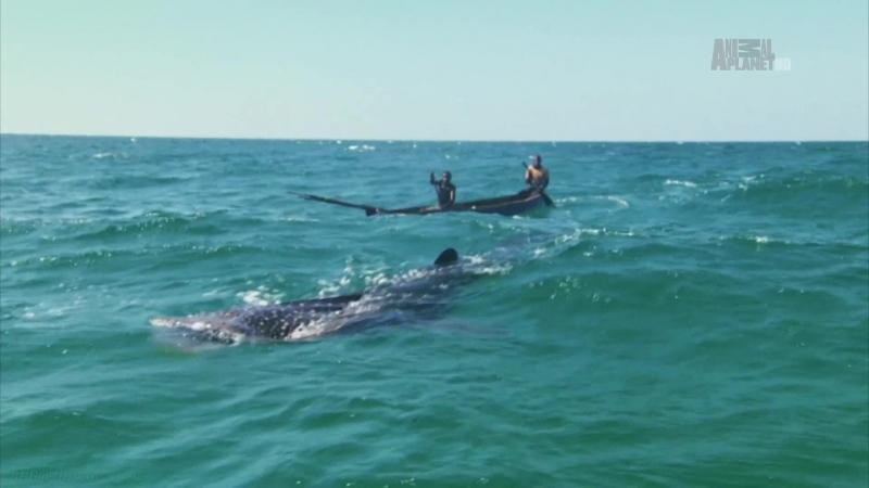 «Неизведанные острова (01). Занзибар. Страна гигантов» (Документальный, животные, 2012)