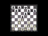 Учимся у чемпионов 14. Владимир Крамник (Ферзевый гамбит)