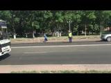 Утятя переходят дорогу в Усть-Каменогорске spletni_uka