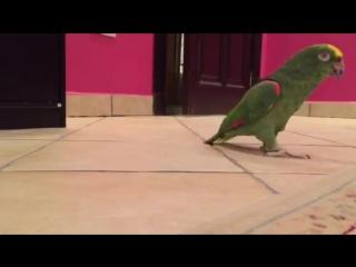 Смеющийся попугай