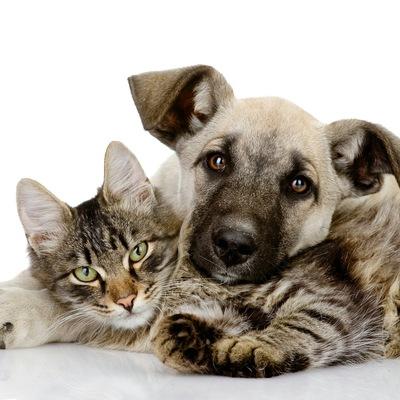 В-Добрые-Руки-Животные Собаки-Кошки-Нальчик