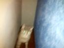 дружелюбная кошка