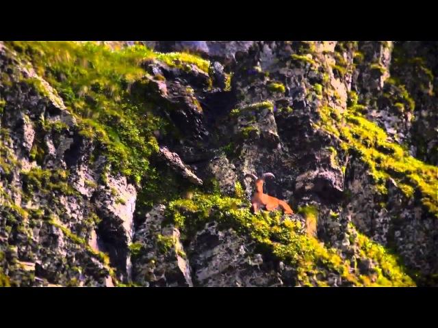 'Заповедный Дагестан' Худ. фильм о природе Дагестана