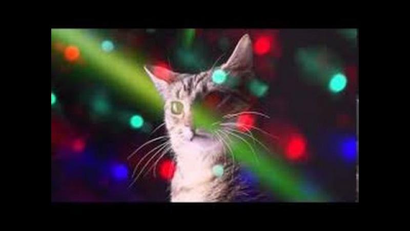 Party Hard Cats - Fiesta Electronica de Gatos 1 HORA!!
