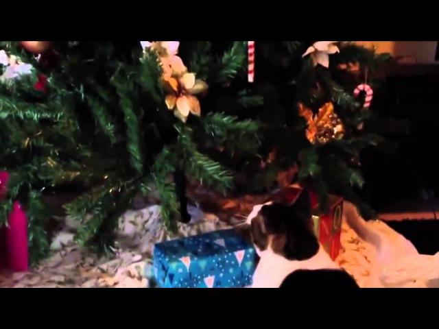 Коты и новогодние Ёлки, смешные, прикольные животные, подборка