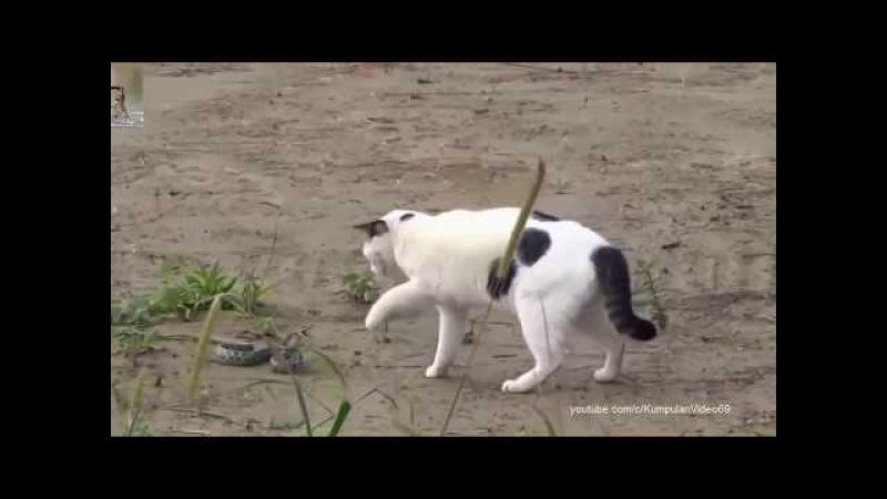 20 Kucing Paling Galak Tak Kenal Takut..? 😹 Buaya Aja Kabur ..?