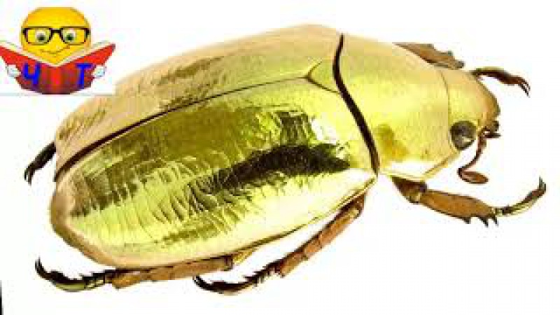 Слушать Аудио Книги Видео Эдгар Аллан По Золотий жук-Золотой жук(скорочено) ауд...
