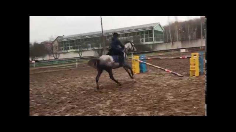 Прыжки на лошади 95см (horse jumping training 95cm)