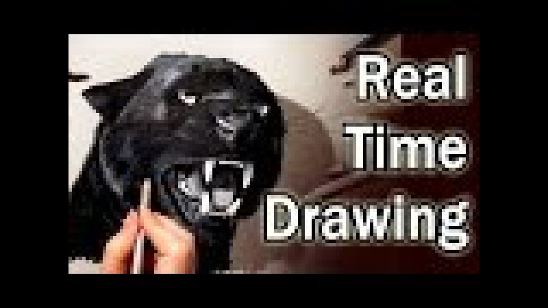 Real time (no time lapse) Pencil Drawing: Black Panther