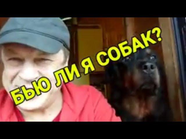 СТОИТ ЛИ БИТЬ РОТВЕЙЛЕРА дрессировка и воспитание собаки