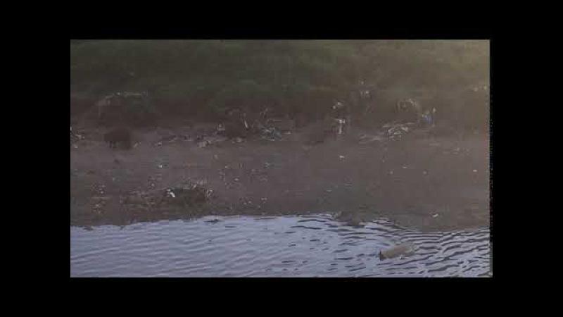 Capivaras: Amamentando. Rio Paraibuna. JF, MG, Brasil. IMG_0900. 15,4 MB. 18h26. 15nov17. 01