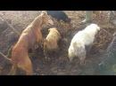 CACHORROS vs 1000 RATOS ‹ The worlD ›